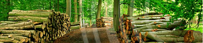 Timber Poland - Okleiny naturalne